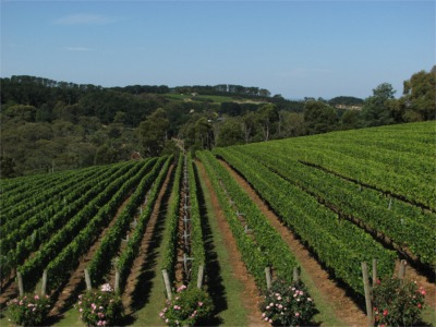 winery1.jpg